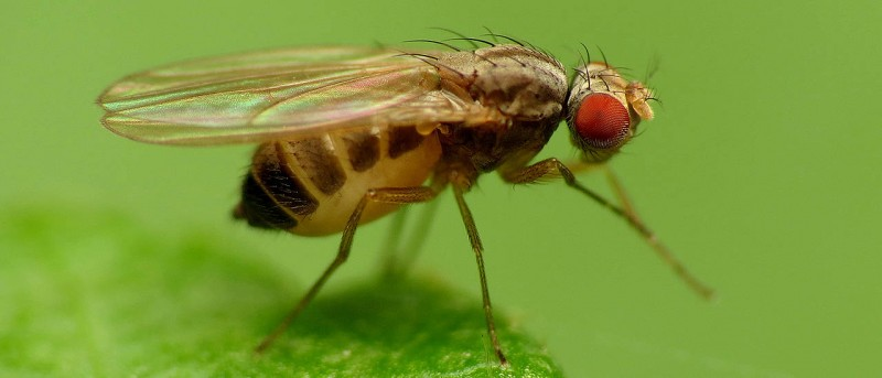 High-intensity light makes fruit flies take longer siestas and delay their eveni