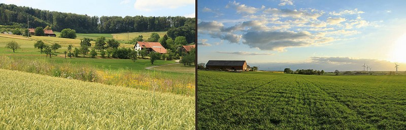 Small-scale agricultural landscapes (left) offer advantages: they promote biolog