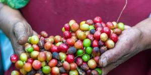 Fair prices for coffee beans could alleviate poverty for many people - but unfor